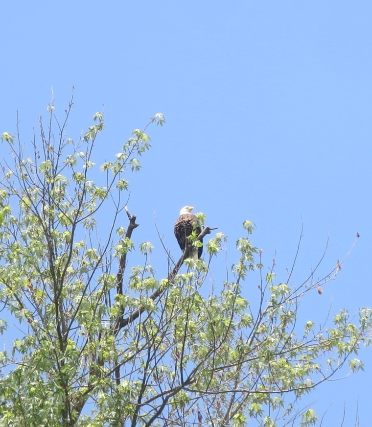 Even this eagle in WV is keeping an eye on his checkbook.